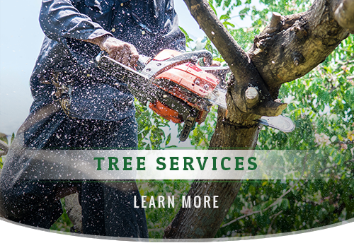 When You Should Hire a Tree Service Company