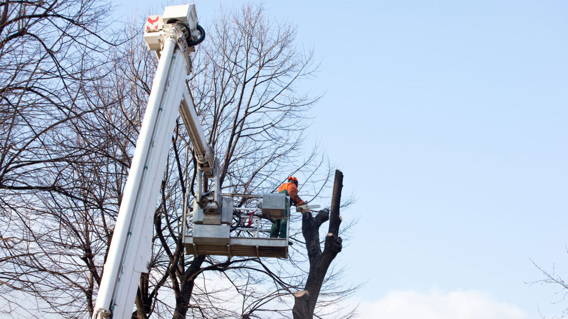 Choosing the right tree pruning method for your tree